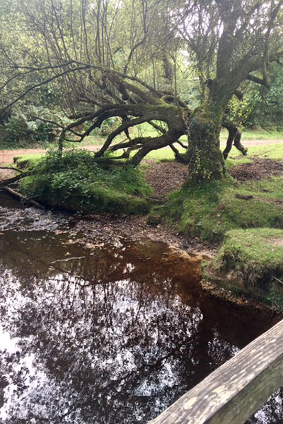 Water under bridge in New Forest walk with Lesley Lyle